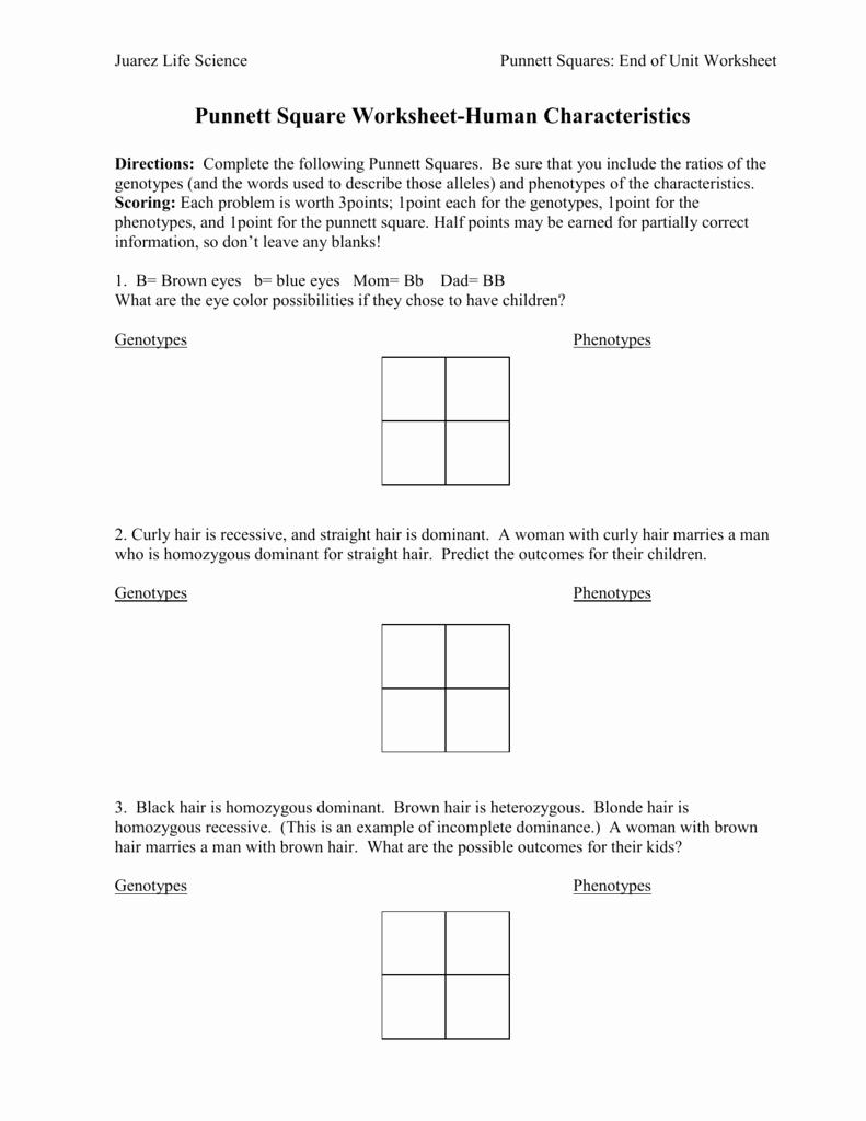 Punnett Square Practice Problems Worksheet Unique Punnett Square Worksheet