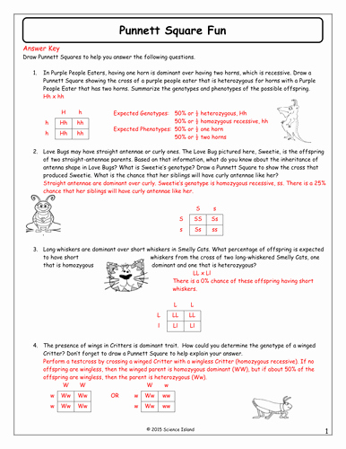 Punnett Square Practice Worksheet Answers Awesome 13 Punnett Square Fun Answer Keycx Genetics