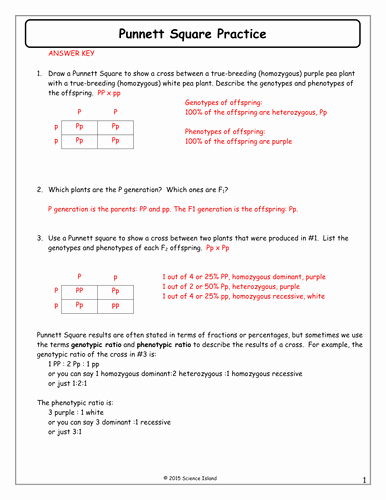 Punnett Square Practice Worksheet Answers Awesome 7 Punnett Square Practice Answer Keycx