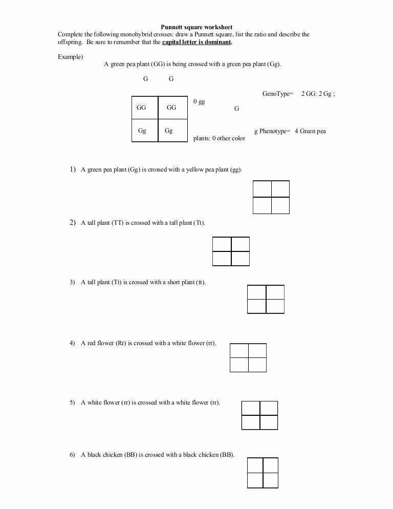 Punnett Square Practice Worksheet Answers Awesome Punnett Square Worksheet