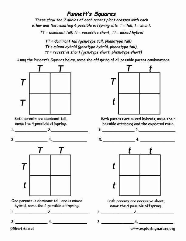 Punnett Square Practice Worksheet Answers Lovely Punnett Square Worksheets