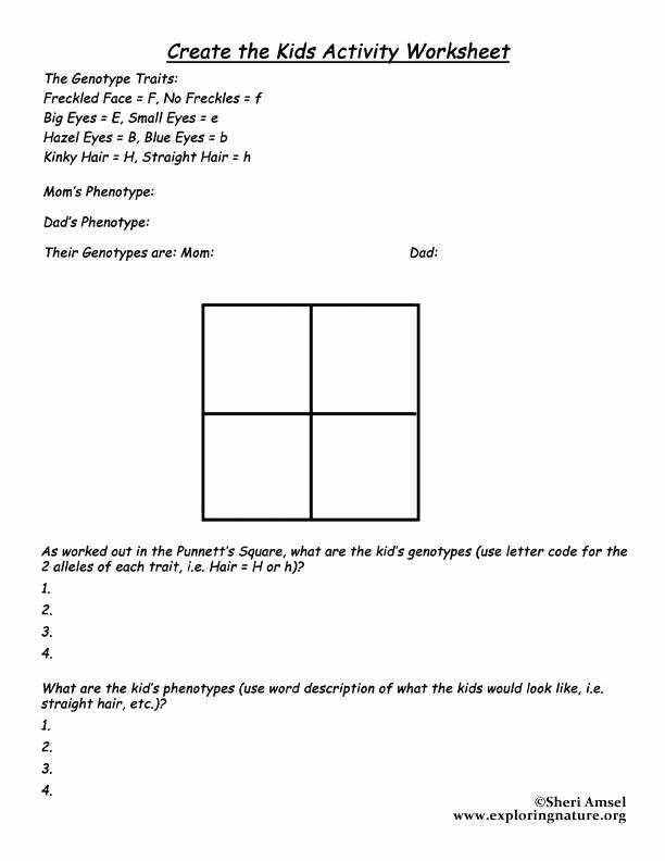 Punnett Square Practice Worksheet Answers New Punnett Square Worksheet Answers