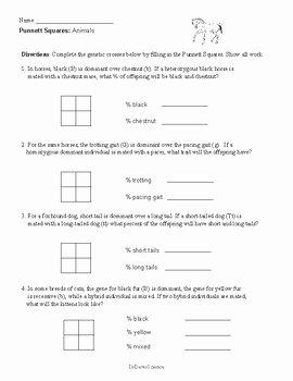 Punnett Square Practice Worksheet Awesome Punnett Squares Worksheets and Practice by Dr Dave S