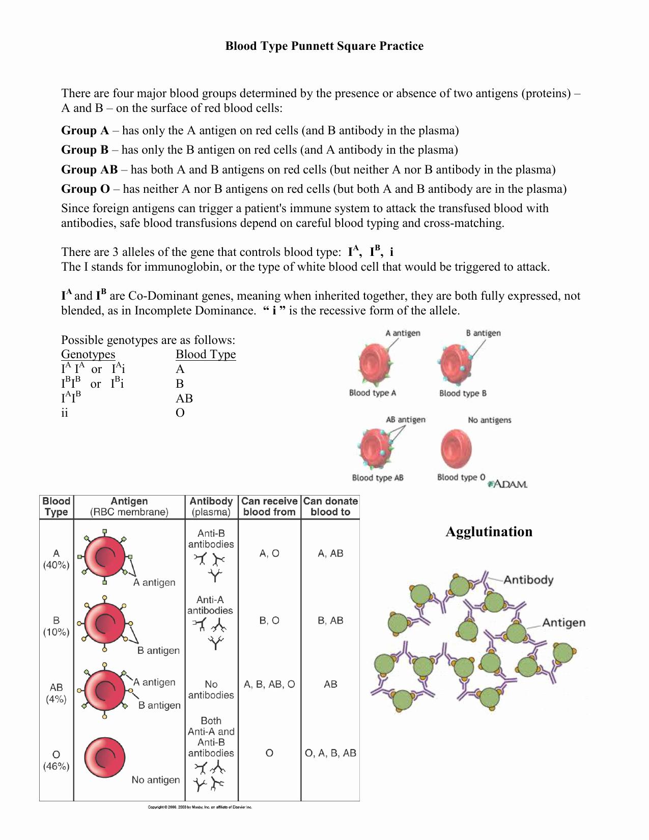 Punnett Square Practice Worksheet Beautiful Punnett Square Practice Worksheets