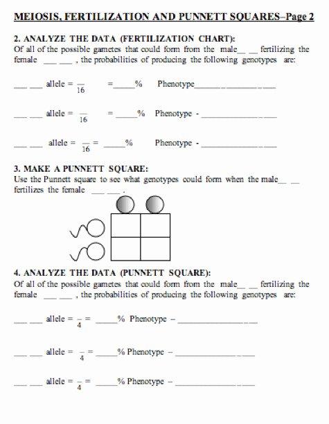 punnett square worksheet answers