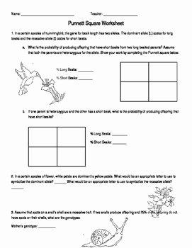 Punnett Square Practice Worksheet Elegant Punnett Square Worksheet by Amanda Behen