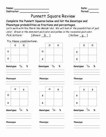 Punnett Square Practice Worksheet Fresh Punnett Square Practice Worksheet