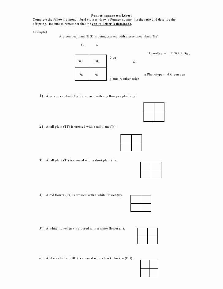 Punnett Square Practice Worksheet Fresh Punnett Square Worksheet