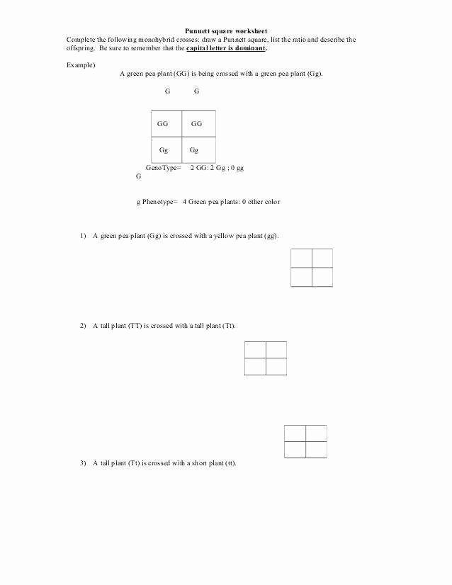 Punnett Square Practice Worksheet Luxury Punnett Square Worksheets