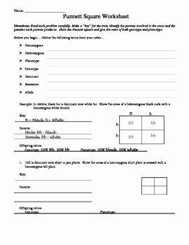 Punnett Square Practice Worksheet New Punnett Square Worksheet by Aussie Science Teacher