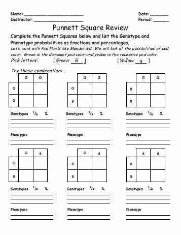 Punnett Square Practice Worksheet Unique Punnett Square Practice Worksheet with Answers