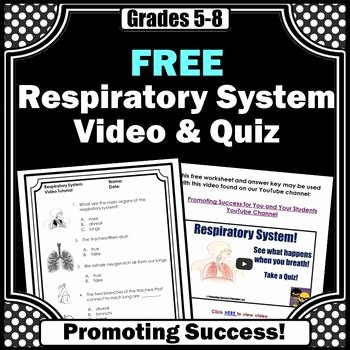 Respiratory System Worksheet Answer Key Awesome 17 Best Images About 5 6 Science Respiratory and