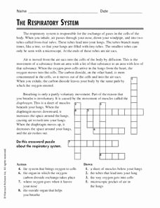 Respiratory System Worksheet Answer Key Beautiful the Respiratory System Worksheet for 5th 6th Grade