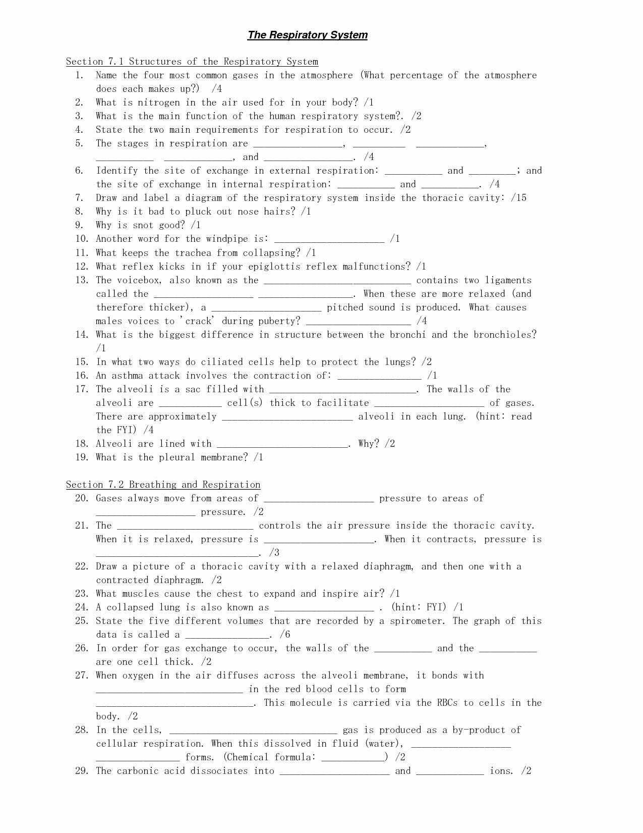 Respiratory System Worksheet Answer Key Elegant 16 Best Of the Respiratory System Worksheet Answers