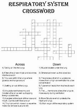 Respiratory System Worksheet Answer Key Fresh Biology Crossword Puzzle the Respiratory System Includes
