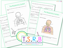Respiratory System Worksheet Answer Key Fresh Respiratory System Worksheet by thescienceresourcebank