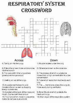 Respiratory System Worksheet Answer Key Inspirational Biology Crossword Puzzle the Respiratory System Includes