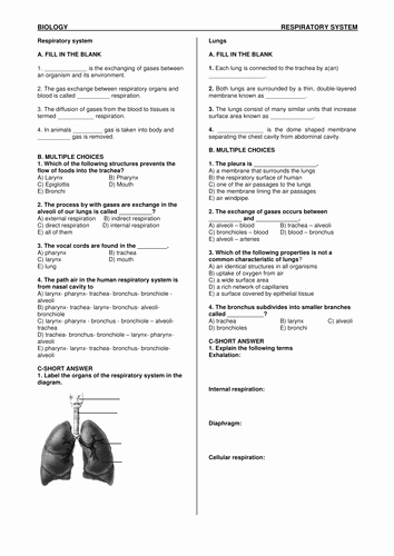 Respiratory System Worksheet Answer Key New Mdeniz S Shop Teaching Resources Tes