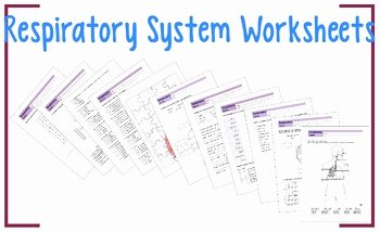 Respiratory System Worksheet Answer Key Unique Respiratory System Worksheets