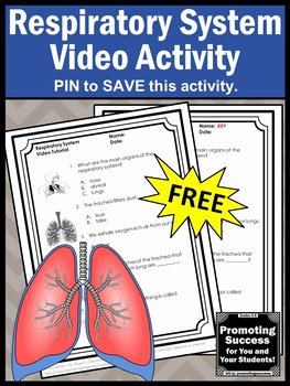 Respiratory System Worksheet Pdf Awesome Free Respiratory System Test Human Body Systems Grade 5