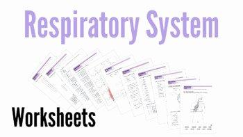 Respiratory System Worksheet Pdf Fresh Respiratory System Worksheets by Biogeo Science