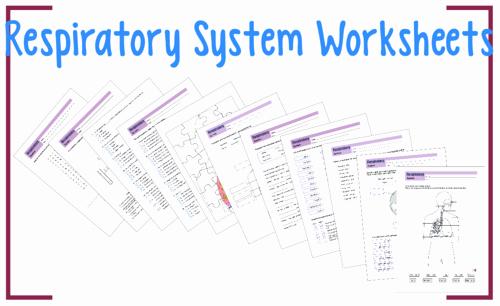 Respiratory System Worksheet Pdf Luxury Respiratory System Worksheet Pack by Rahmich Teaching