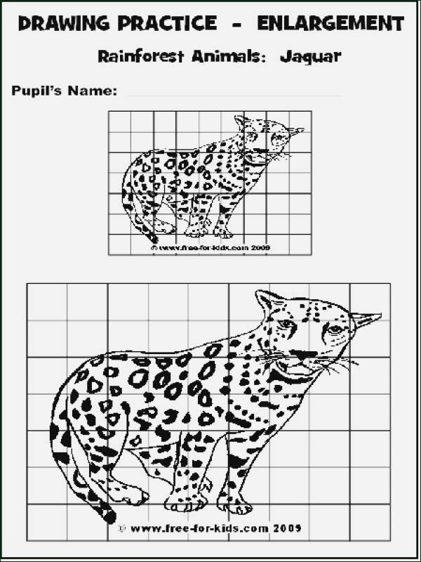 Scale Drawings Worksheet 7th Grade Awesome Scale Drawing Worksheet 7th Grade