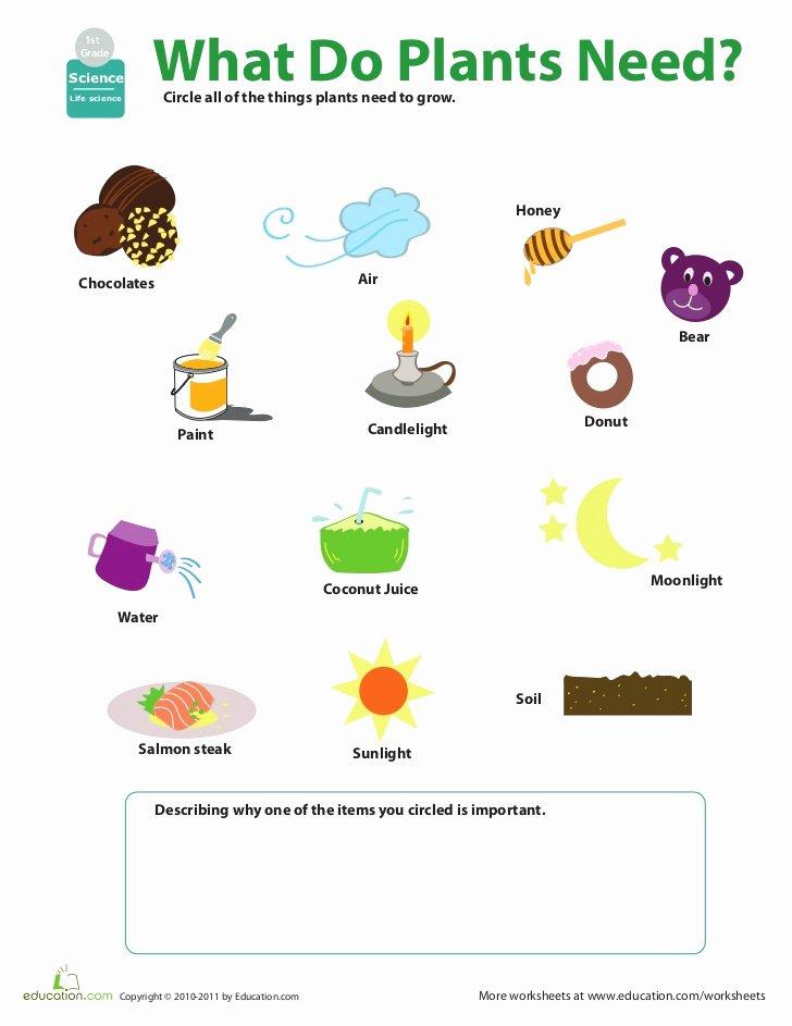 Science Worksheet for 1st Grade Inspirational W O R K S H E E T 1
