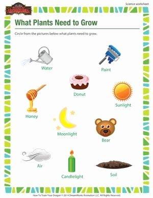 Science Worksheet for 1st Grade Lovely Check Out the Free 1st Grade Science Worksheets