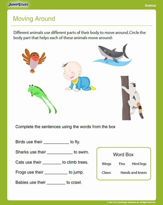 Science Worksheet for 1st Grade Lovely New 178 First Grade Science Worksheets Animals