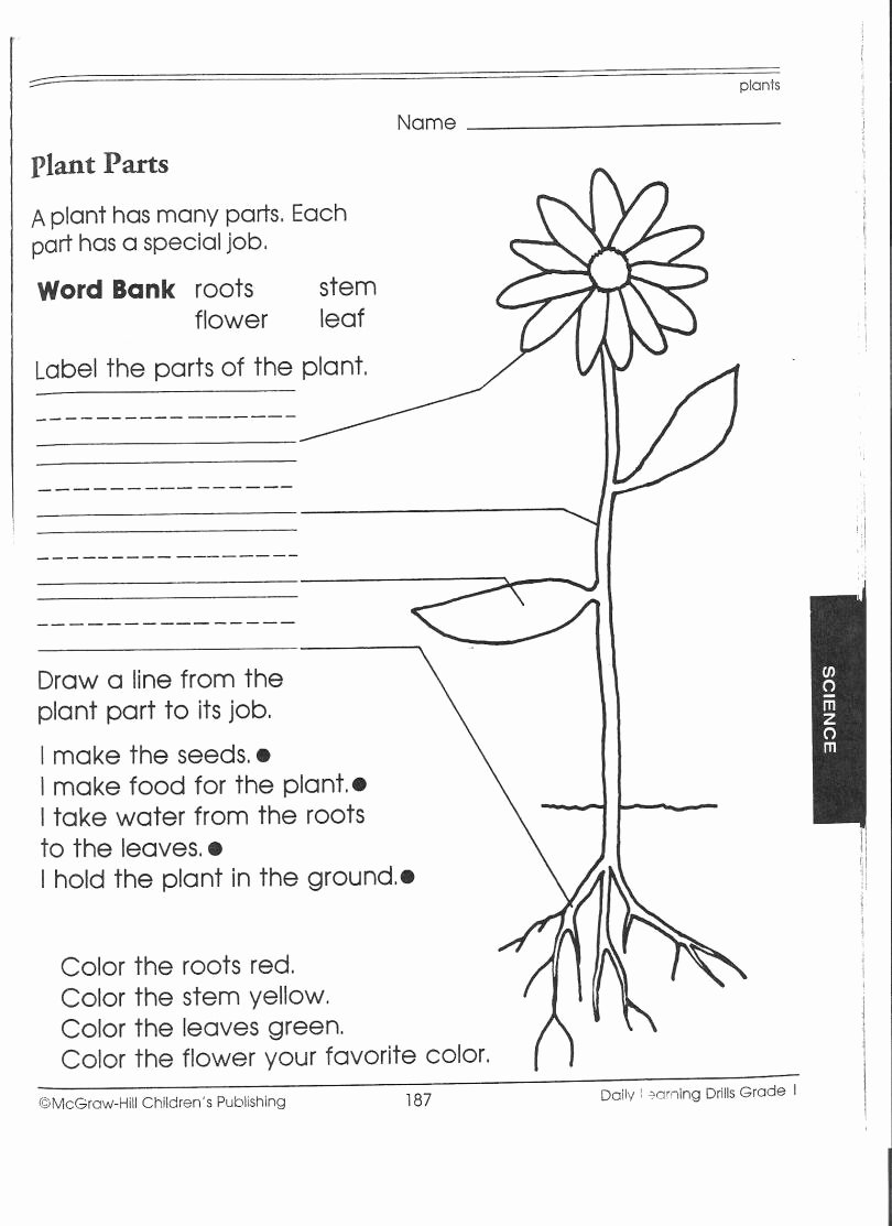 Science Worksheet for 1st Grade Luxury Kindergarten Science Worksheets Worksheet Mogenk Paper Works