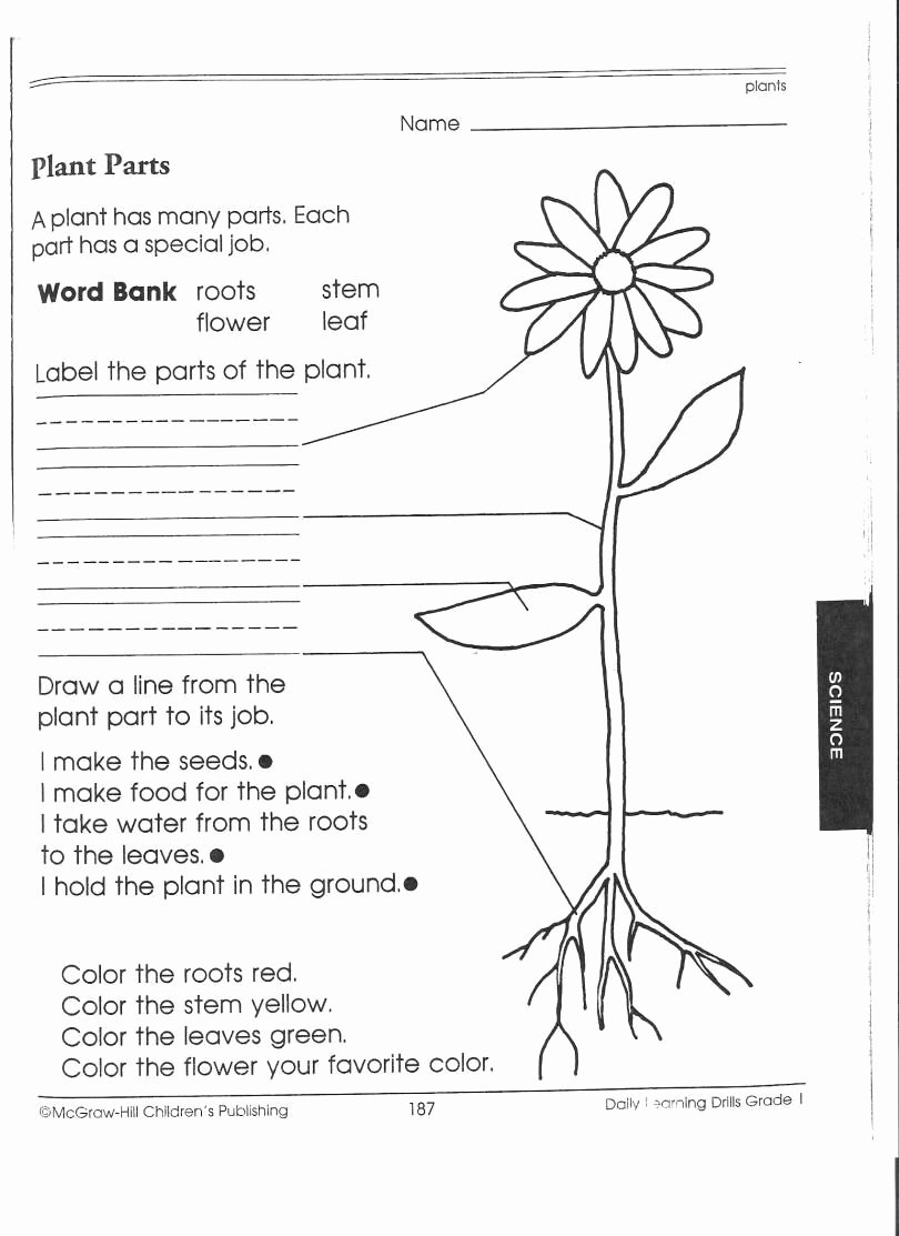 Science Worksheet for 1st Grade Unique 1st Grade Science Worksheets