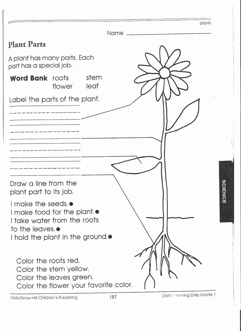 Science Worksheet for 1st Grade Unique 1st Grade Science Worksheets