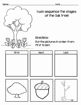 Sequence Of events Worksheet Awesome Sequencing Worksheet for Oak Tree by Messy Teaching