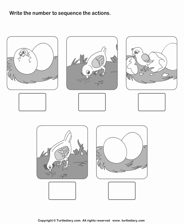 Sequence Of events Worksheet Elegant Picture Sequencing Birth Of A Chicken Worksheet Turtle Diary