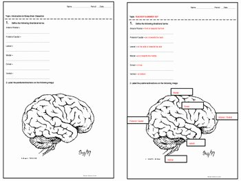 Sheep Brain Dissection Worksheet New Introduction to Sheep Brain Dissection Half Sheets by