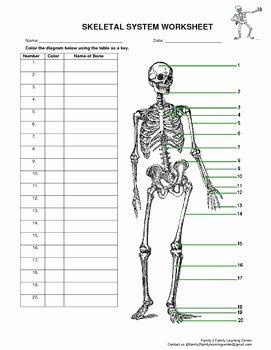 Skeletal System Labeling Worksheet Pdf Beautiful Skeletal System Worksheet by Family 2 Family Learning