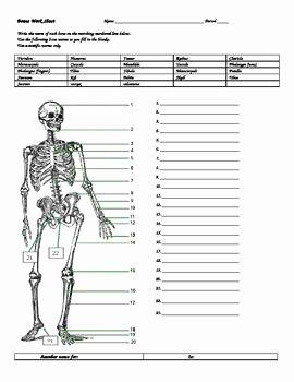 Skeletal System Labeling Worksheet Pdf Best Of Human Anatomy Homework and Worksheets On Pinterest