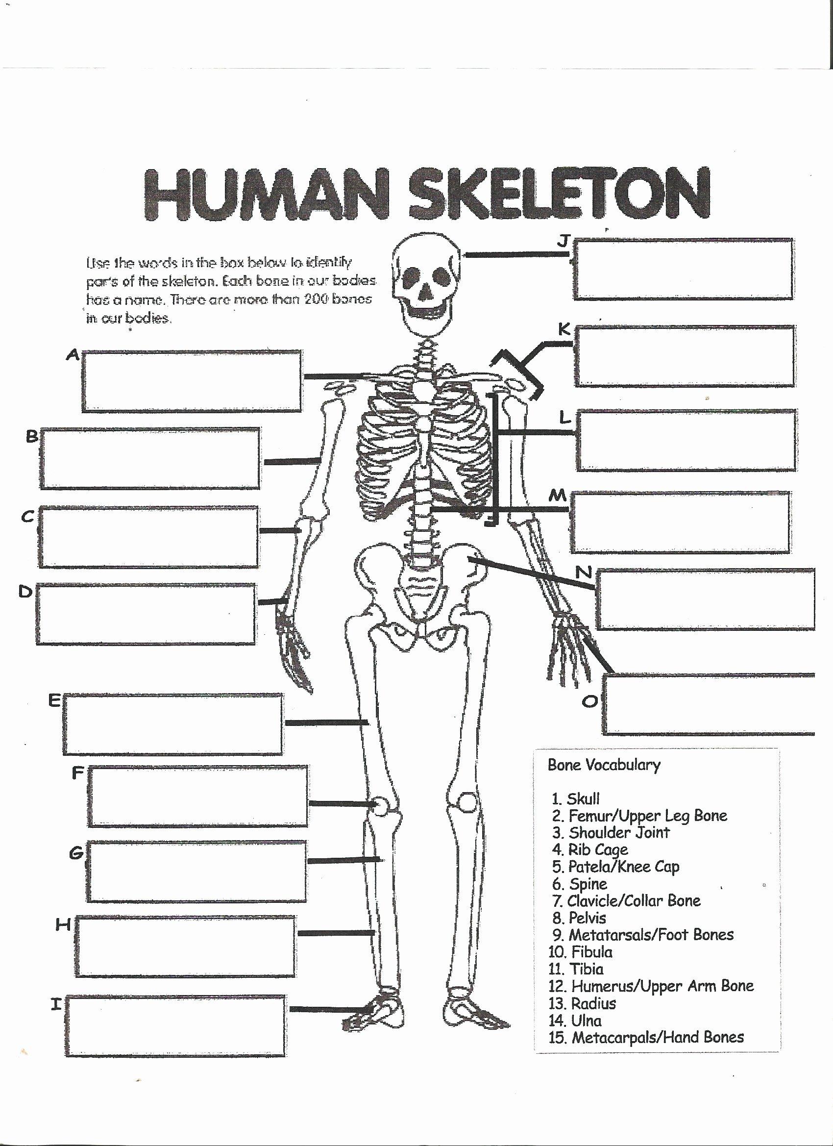Skeletal System Labeling Worksheet Pdf Best Of Mckenna Mrs Home Page