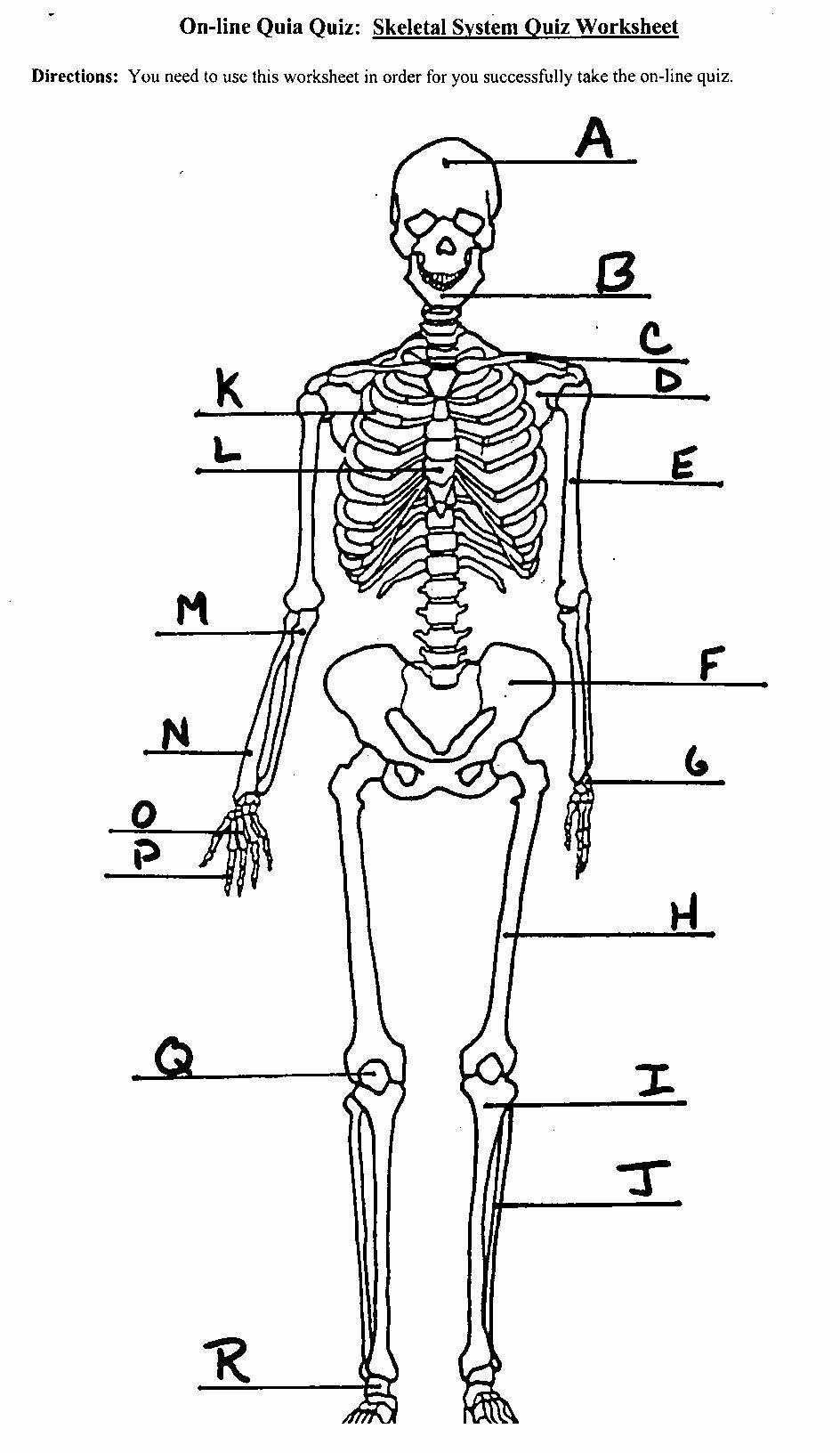 Skeletal System Labeling Worksheet Pdf Fresh Image Result for Skeletal System Labeled