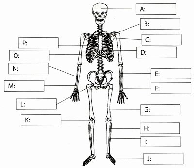 Skeletal System Labeling Worksheet Pdf Fresh Kim Kardashian Circulatory System Worksheets for Kids