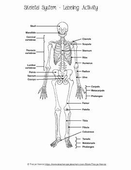 Skeletal System Labeling Worksheet Pdf Fresh Skeletal System Labeling Worksheet by Tracye Nance