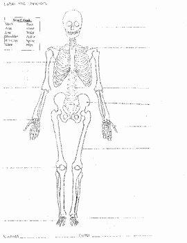 Skeletal System Labeling Worksheet Pdf Fresh Skeletal System Worksheet 8 5x11 Label Bones Of the