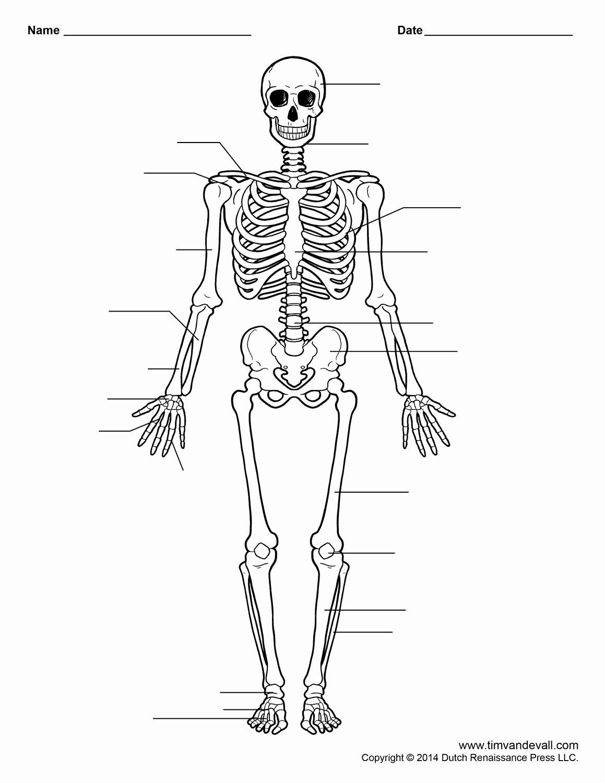Skeletal System Labeling Worksheet Pdf Inspirational Free Printable Human Skeleton Worksheet for Students and