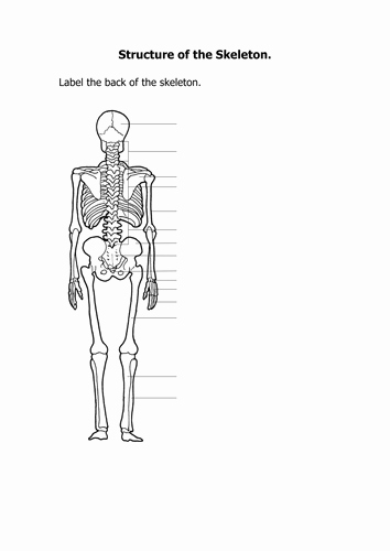 Skeletal System Labeling Worksheet Pdf Luxury Skeletal System by Jules42 Teaching Resources Tes