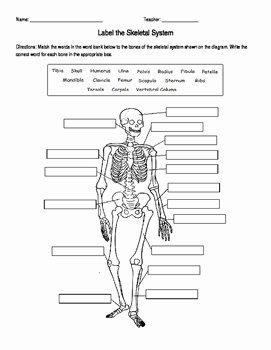 Skeletal System Labeling Worksheet Pdf New Skeletal System Labeling by Amanda Behen