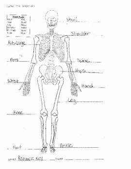 Skeletal System Labeling Worksheet Pdf New Skeletal System Worksheet 8 5x11 Label Bones Of the