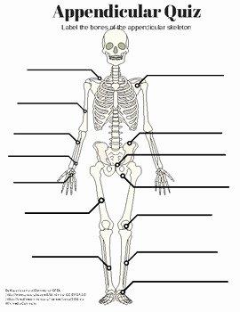 Skeletal System Labeling Worksheet Pdf Unique Appendicular Skeleton Labeling Quiz and Key by Amazing