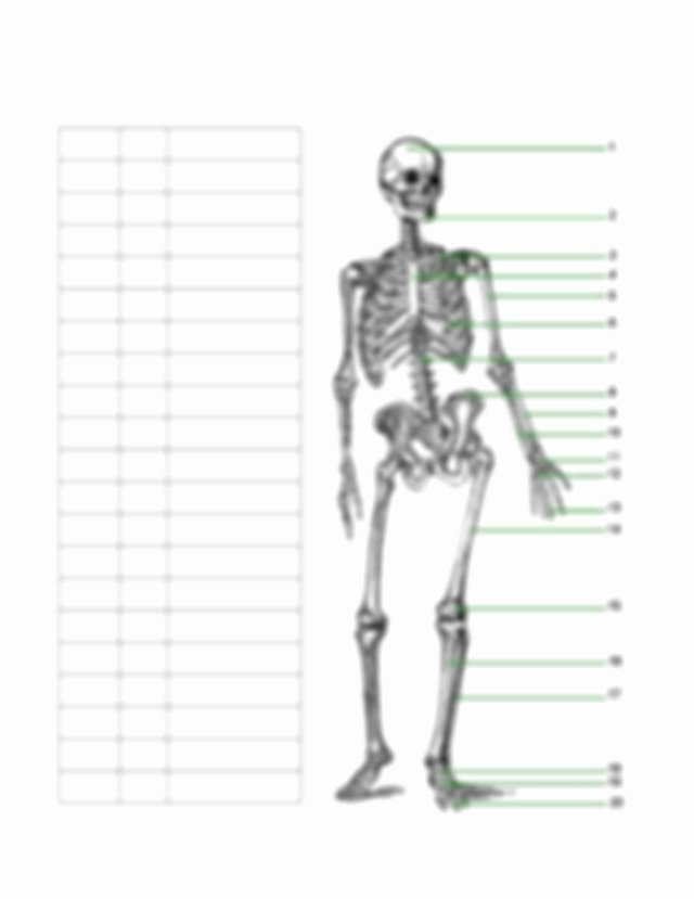 Skeletal System Worksheet Pdf Beautiful Skeletal System Worksheet 1 Skeletal System Worksheet