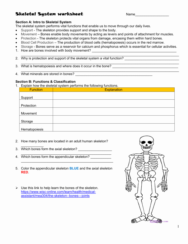 Skeletal System Worksheet Pdf Best Of Skeletal System Worksheet